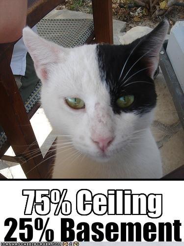 funny-pictures-cat-is-a-quarter-evil & Basement Catu0027s Humiliation   Amy Letinsky